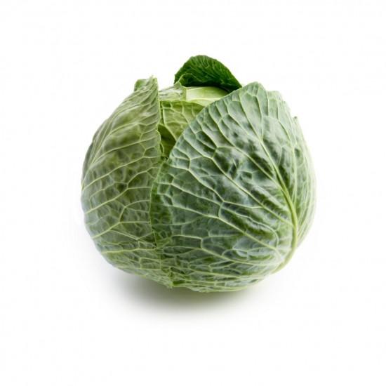 Cabbage 1 Head